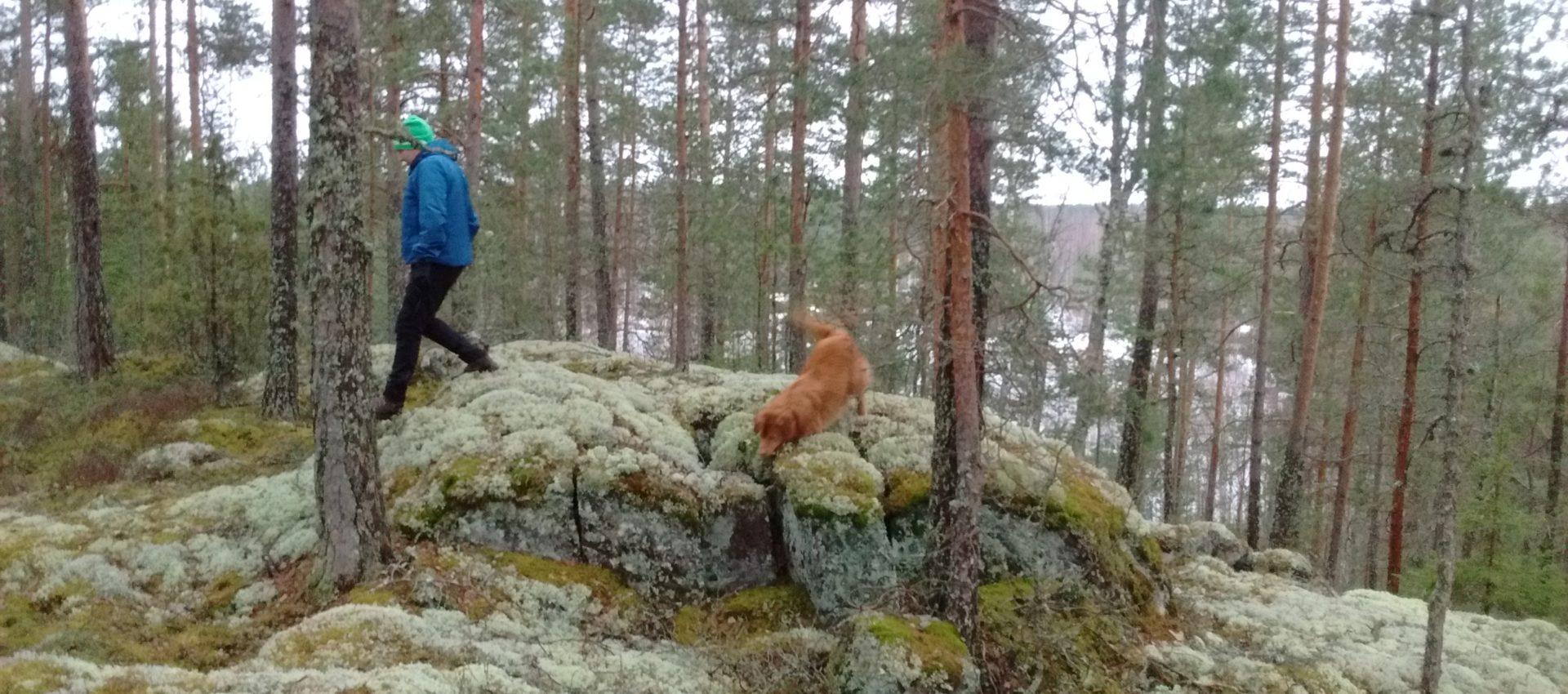 Luontolahja 100-vuotiaalle Suomelle - XAMK 33b7614aff