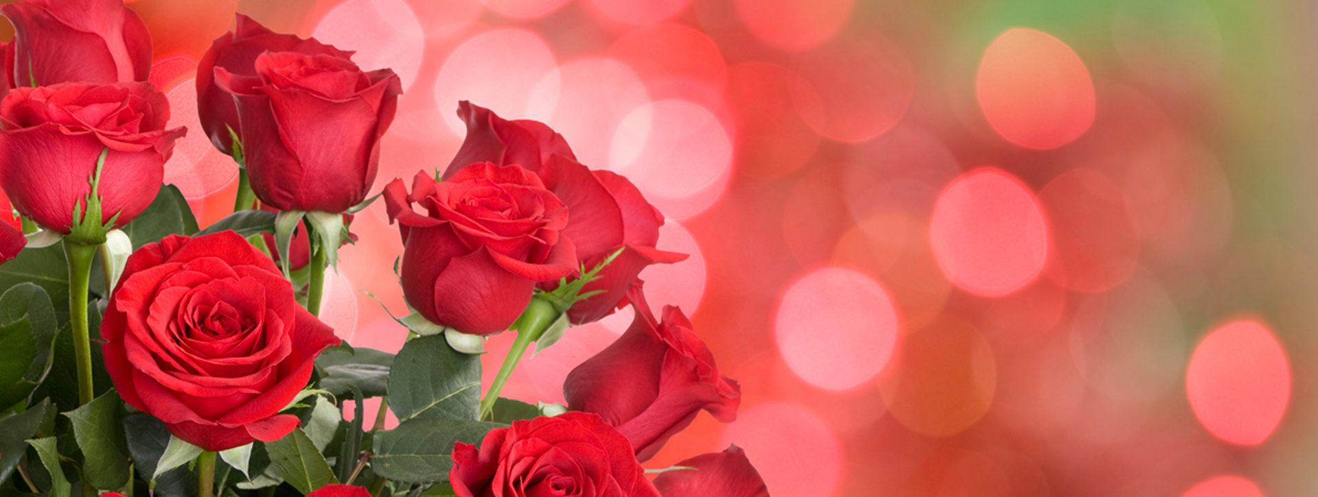 punaisia ruusuja