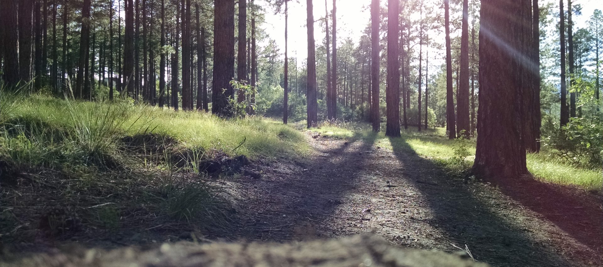 Future Hack: Environment and Forestry hackathon