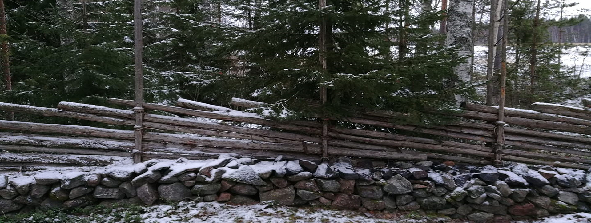 Vanha perinneaita metsän reunassa.