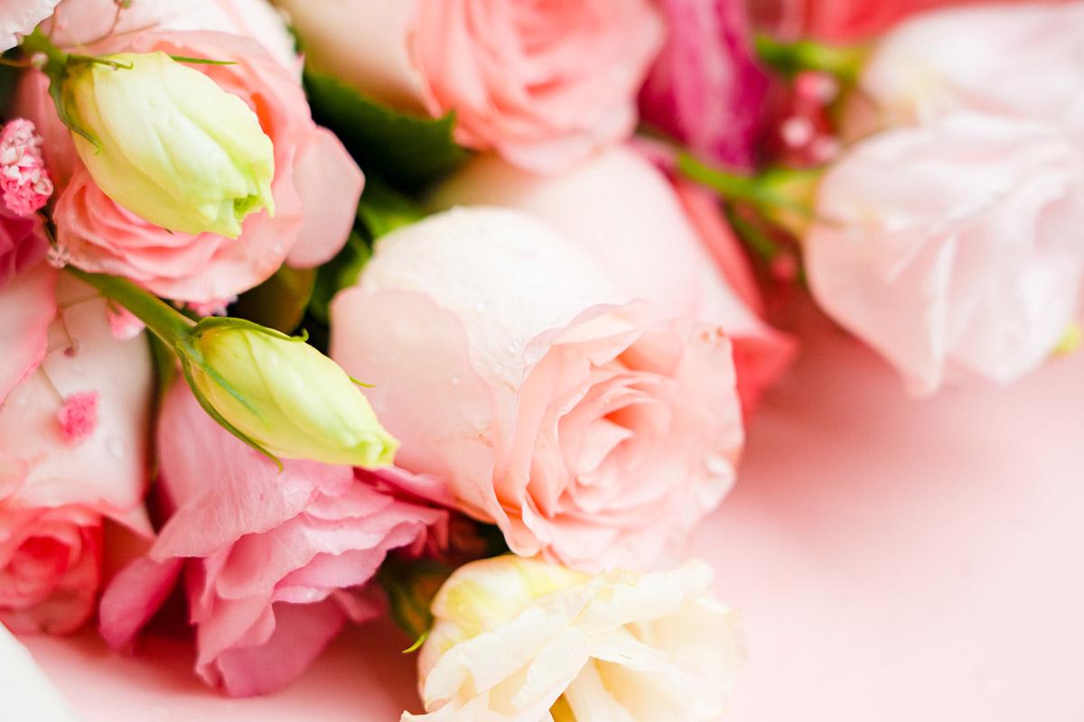 Vaaleanpunaisia ruusuja.